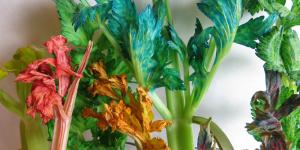 celery-food-dye-1