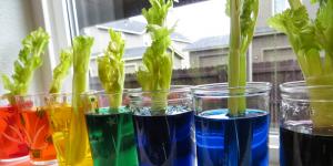 celery-food-dye-2